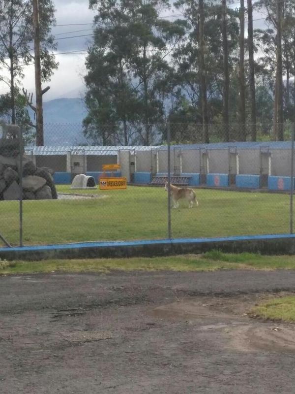 Los Mejores Hoteles para Perros en Comunidad Autónoma de Aragón
