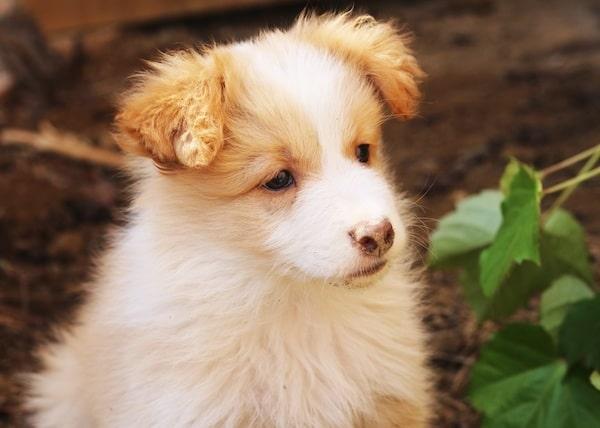 Hoteles Caninos en Comunidad Autónoma de Cataluña