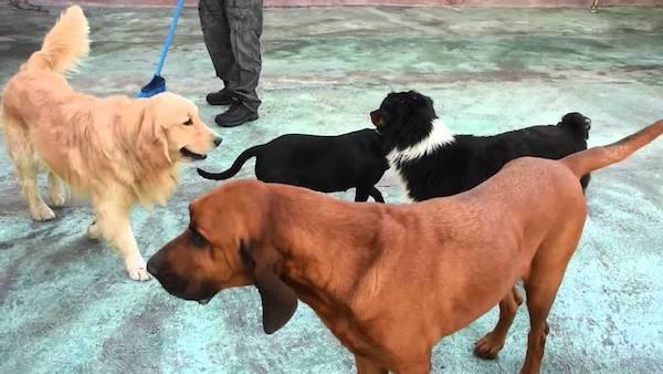 Hoteles Caninos en Principado de Asturias
