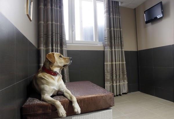 Hoteles Caninos en Comunidad Autónoma de Cantabria